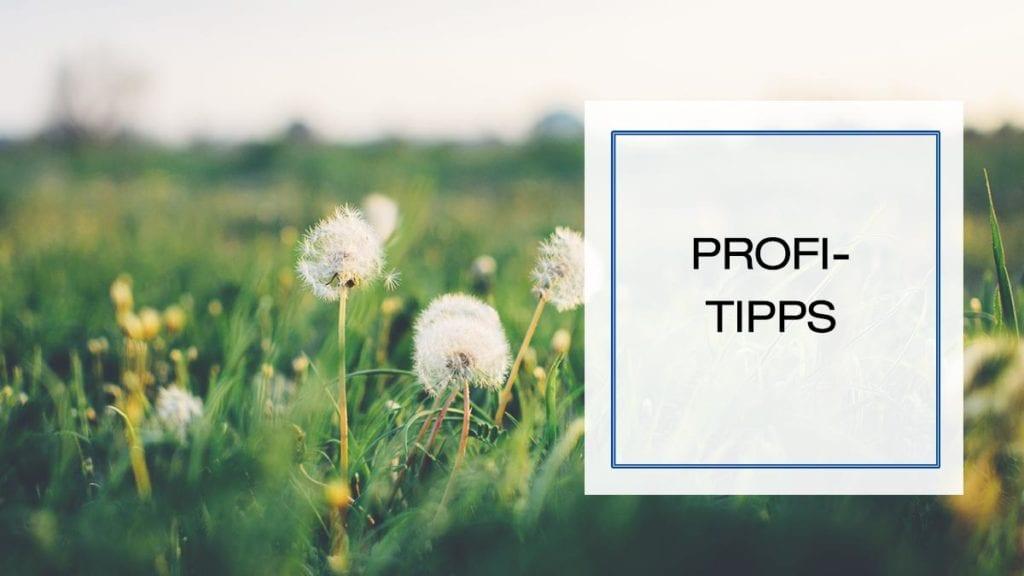 Beitragsbild für Pflanzentipps in der Kategorie Profi-Tipps