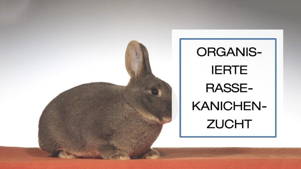 Beitragsbild für die Kategorie organisierte Rassekaninchenzucht
