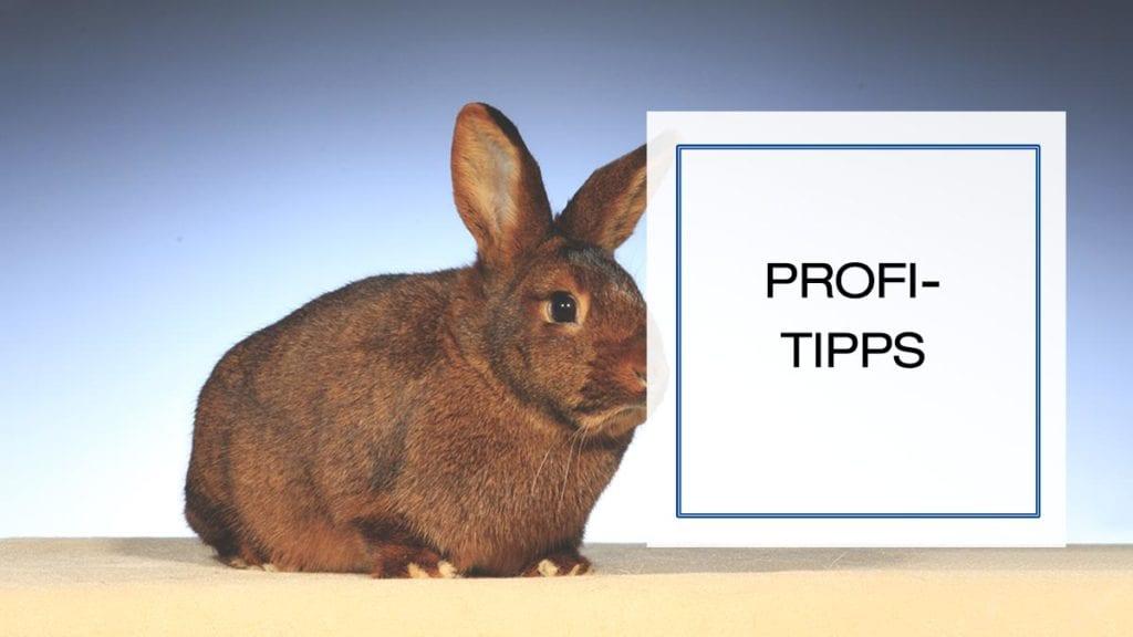 Beitragsbild für die Kategorie Profi-Tipps